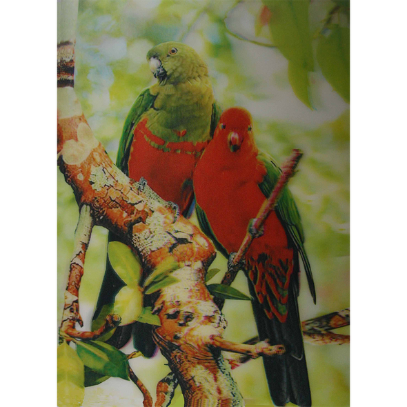 Two Colorful Parrots - 3D Lenticular Poster - 10 X 14