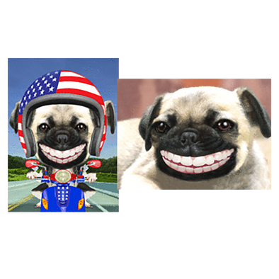 Pug- Smiling, Pug in a Bike - 2 Humorous Postcards 3D Lenticular