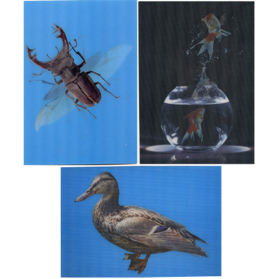 3 - Duck, Gold Fish, Beetle - 3D Lenticular Postcards  Greeting Cards