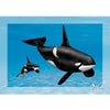 Orca - Killer Whale - 3D Action Lenticular Postcard Greeting Card