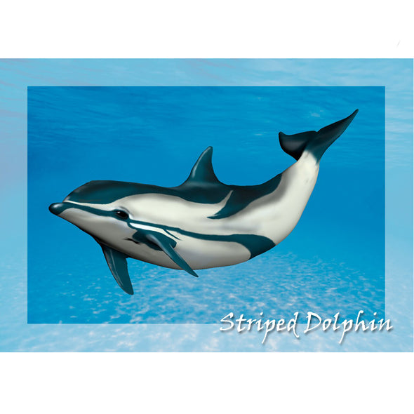 Striped Dolphin - 3D Lenticular Postcard Greeting Card