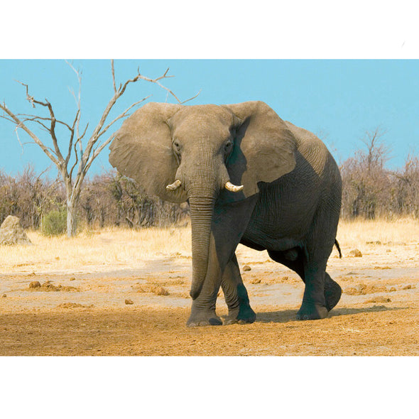 African Bush Elephant - 3D Lenticular Postcard Greeting Card