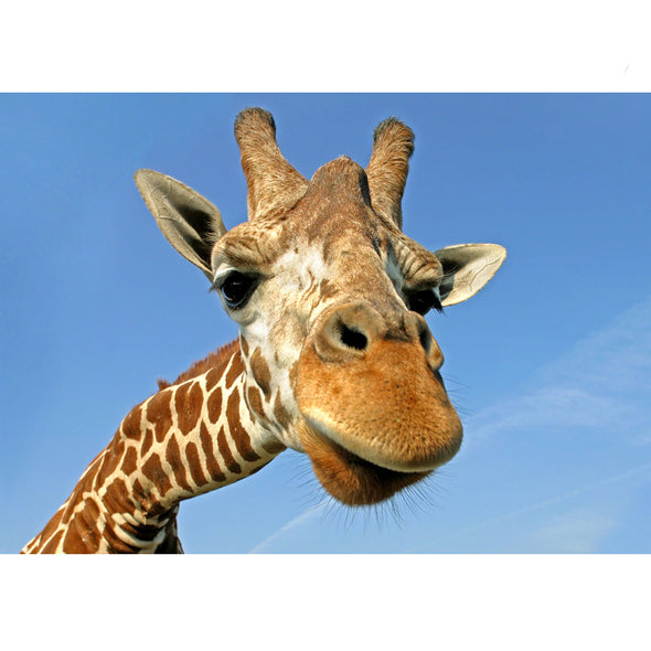 Giraffe - 3D Lenticular Postcard Greeting Card