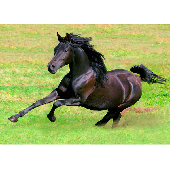 Arabian Horse Galloping - 3D Lenticular Postcard Greeting Card