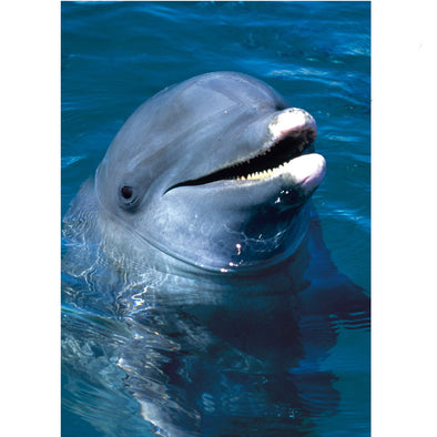 Bottlenose Dolphin - 3D Lenticular Postcard Greeting Card