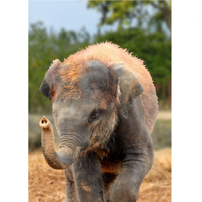 African bush elephant on 3D Postcard