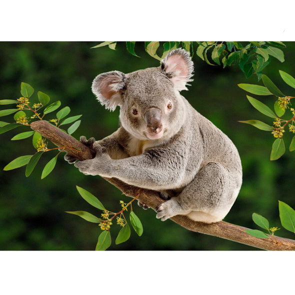 Koala - 3D Lenticular Postcard Greeting Card