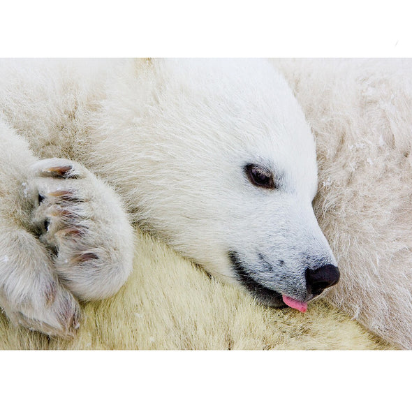 Polar Bear Cub - 3D Lenticular Postcard Greeting Card