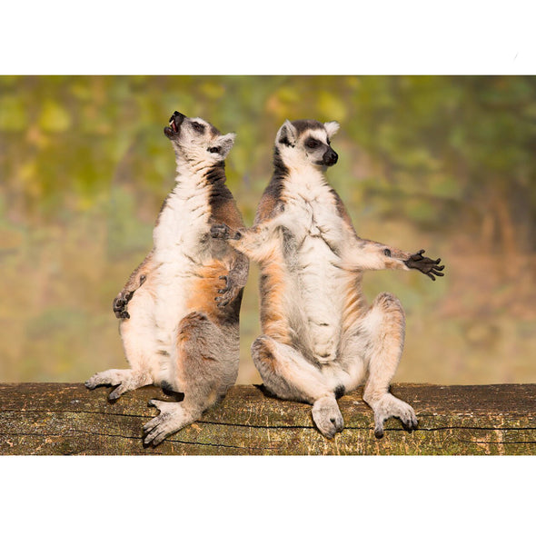 Ring-tailed Lemurs - 3D Lenticular Postcard Greeting Card