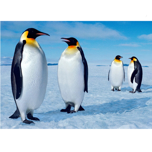 Emperor Penguins - 3D Lenticular Postcard Greeting Card