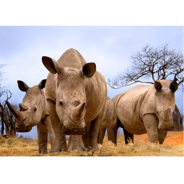 Rhinoceroses in the African Savannah - 3D Lenticular Postcard Greeting Card