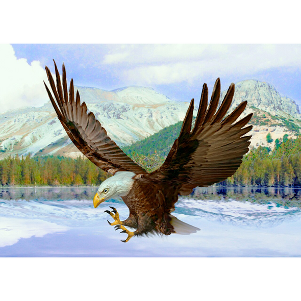 Bald Eagle - 3D Lenticular Postcard Greeting Card