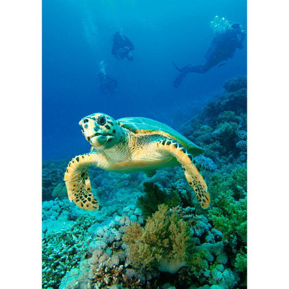 Hawksbill Turtle - 3D Lenticular Postcard Greeting Card