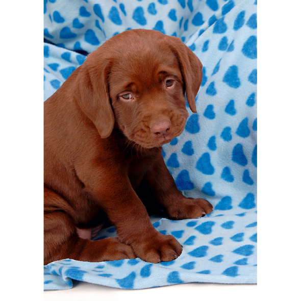 Labrador Retriever - 3D Lenticular Postcard Greeting Card