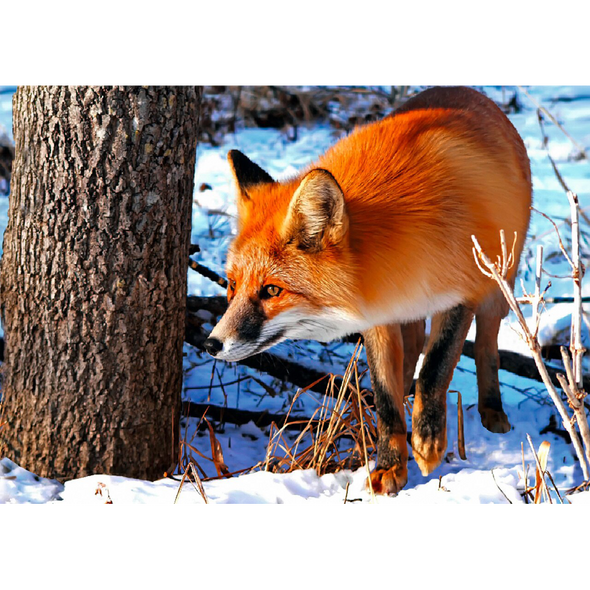 Red Fox - 3D Lenticular Postcard Greeting Card
