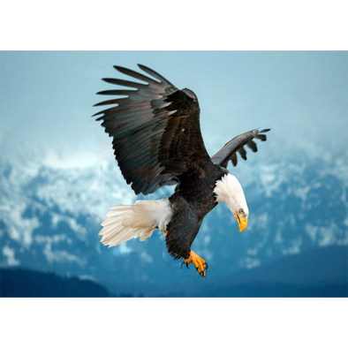 Bald Eagle about to land - 3D Lenticular Postcard Greeting Card