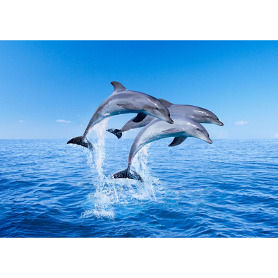 Dolphins Porpoising - 3D Lenticular Postcard Greeting Card