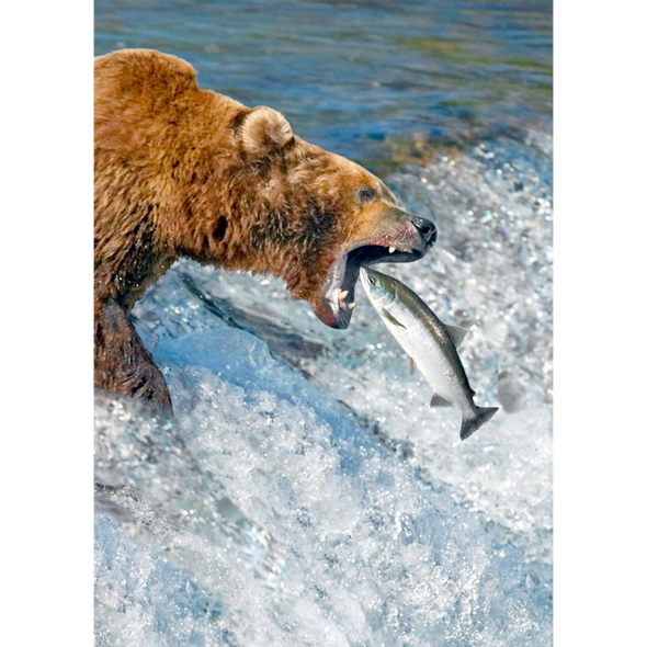 Brown Bear Catching Salmon - 3D Lenticular Postcard Greeting Card