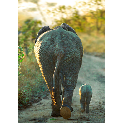 African Elephant and Calf - 3D Lenticular Postcard Greeting Card