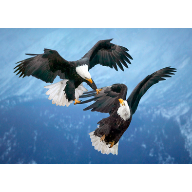 Bald Eagles in Mid-Air - 3D Lenticular Postcard Greeting Card
