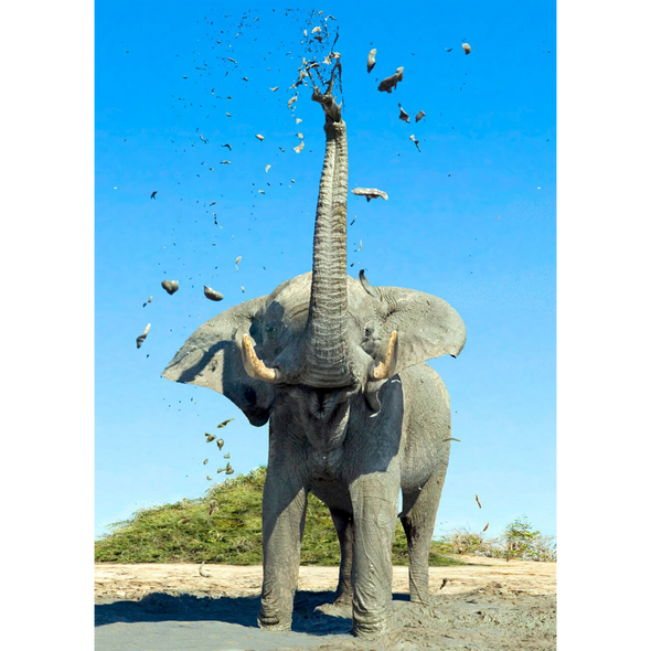 African Elephant Mudbathing - 3D Lenticular Postcard Greeting Card