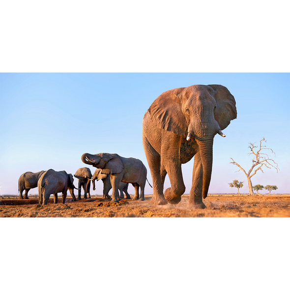 African Elephants - 3D Lenticular Postcard Greeting Card - Oversize