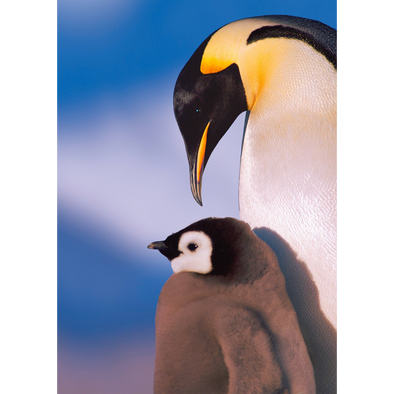 Emperor Penguin and chick - 3D Lenticular Postcard Greeting Card
