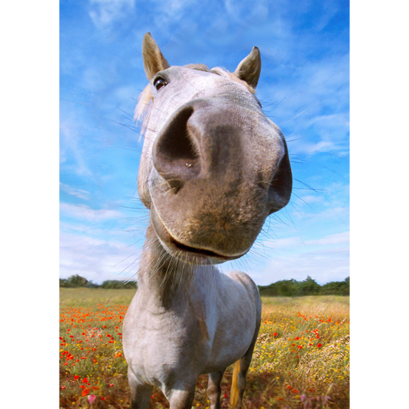 Nosy Horse - 3D Lenticular Postcard Greeting Card
