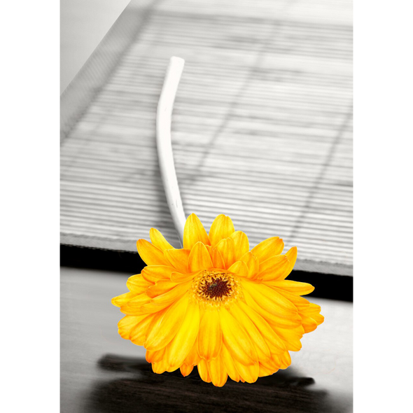 Lone Yellow Gerbera - 3D Lenticular Postcard Greeting Card