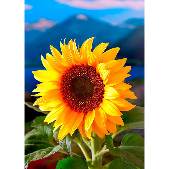 Sunflower - 3D Lenticular Postcard Greeting Card