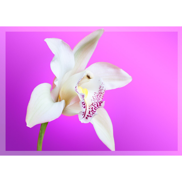 White Orchid  - 3D Lenticular Postcard Greeting Card