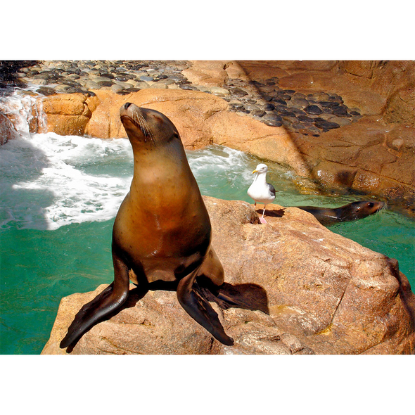 Sea Lion and Gull Sunbathing - 3D Lenticular Postcard Greeting Card