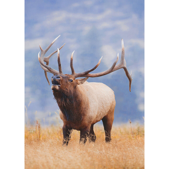 Rocky Mountain Elk - 3D Lenticular Postcard Greeting Card