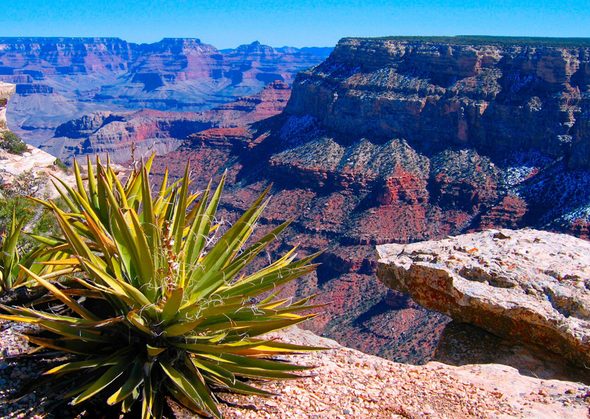 Grand Canyon National Park with Yucca - 3D Lenticular Postcard Greeting Card