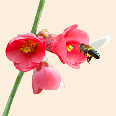 Bee Collecting Nectar - 3D Lenticular Postcard Greeting Card - Maxi