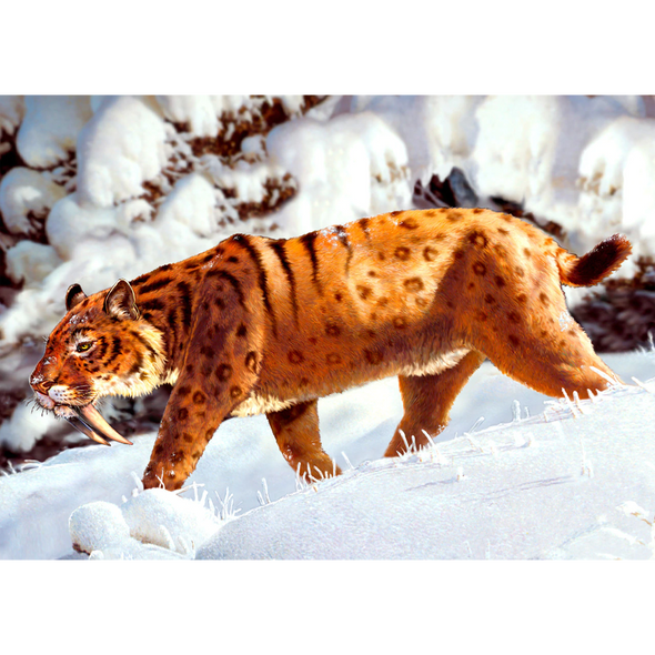 Sabre-tooth Tiger - 3D Lenticular Postcard Greeting Card