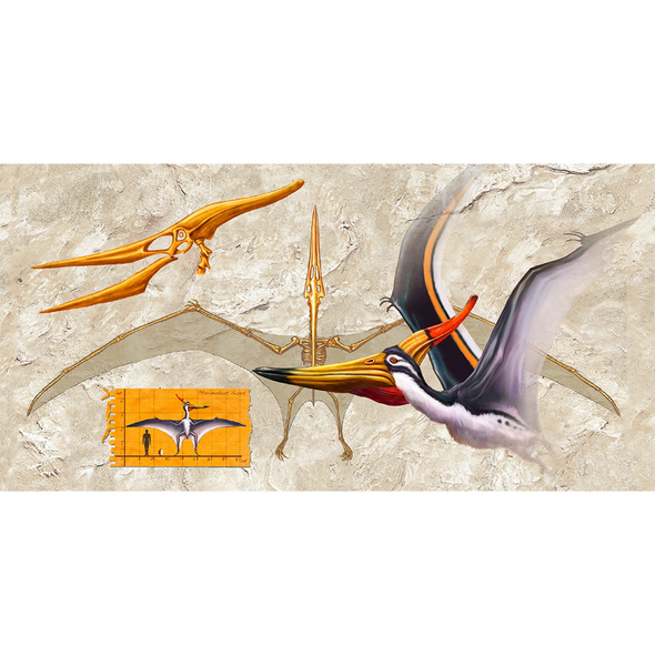 Anatomy of a Pteranodon - 3D Lenticular Postcard Greeting Card - Oversize