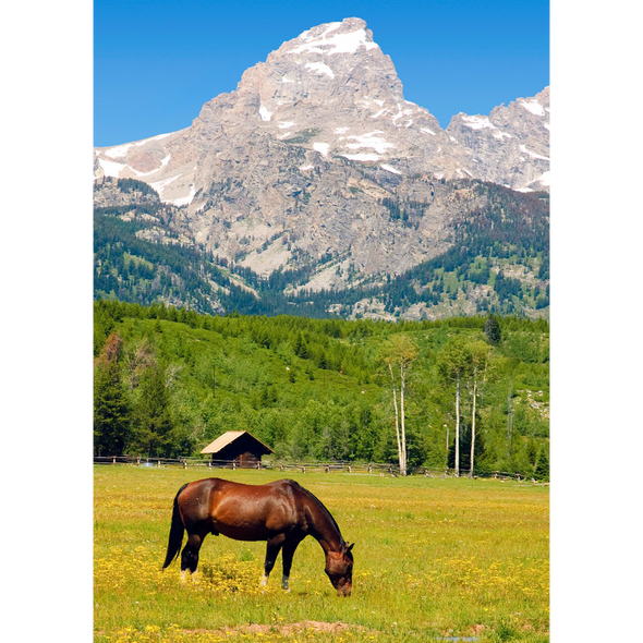 Horse Grazing - Jackson Hole, Wyoming - 3D Lenticular Postcard Greeting Card