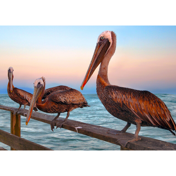 Brown Pelicans - 3D Lenticular Postcard Greeting Card
