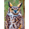 Great Horned Owl - 3D Action Lenticular Postcard Greeting Card