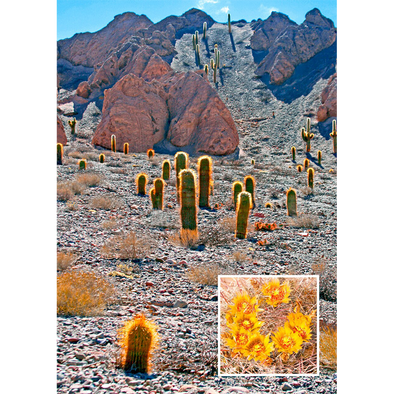 Barrel Cactus - 3D Lenticular Postcard Greeting Card