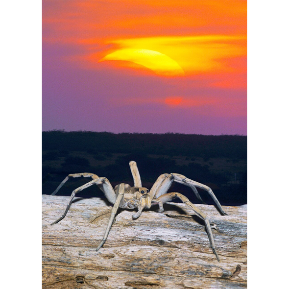 Wolf Spider and Solar Eclipse - 3D Lenticular Postcard Greeting Card