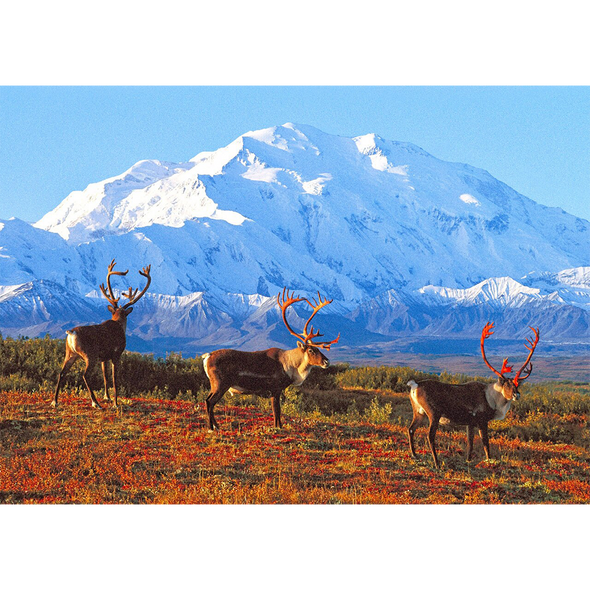 Denali National Park and Preserve - 3D Lenticular Postcard Greeting Card