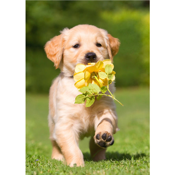 Golden Retriever Puppy with Rose - 3D Lenticular Postcard Greeting Card