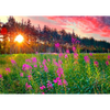 Fireweed - 3D Action Lenticular Postcard Greeting Card