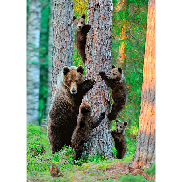 Grizzly bear family - 3D Lenticular Postcard Greeting Card