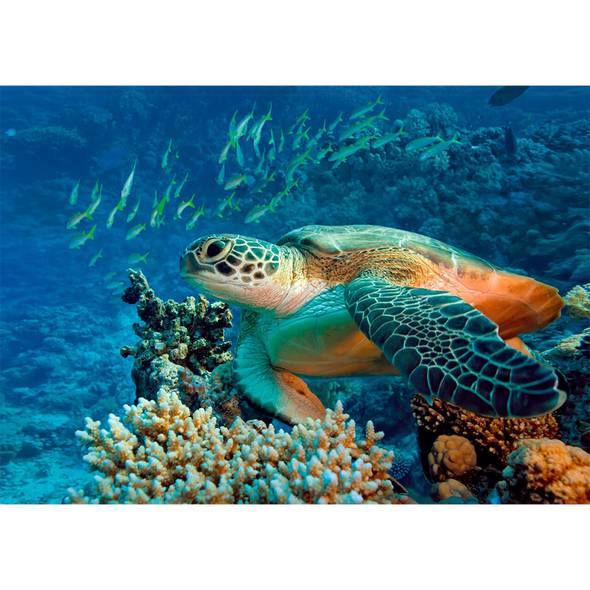 Green Sea TURTLE - 3D Lenticular Postcard Greeting Card