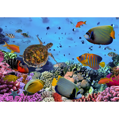 Colorful coral reef with tropical fish - 3D Lenticular Postcard Greeting Card