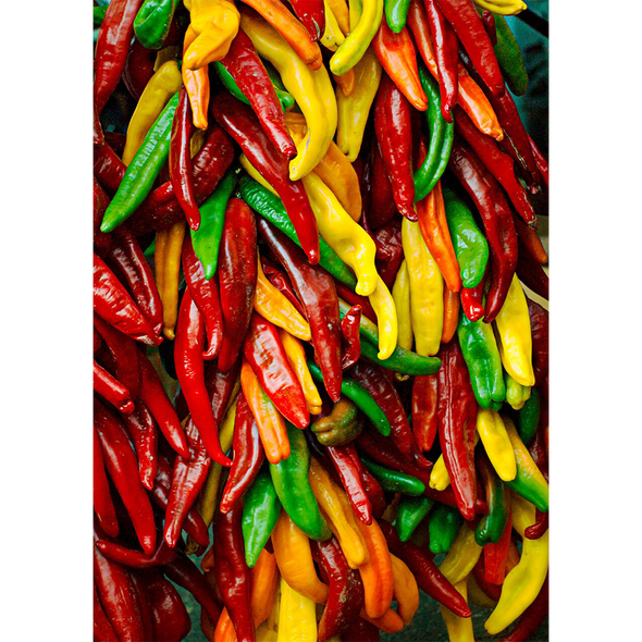 Chile Peppers - 3D Action Lenticular Postcard Greeting Card