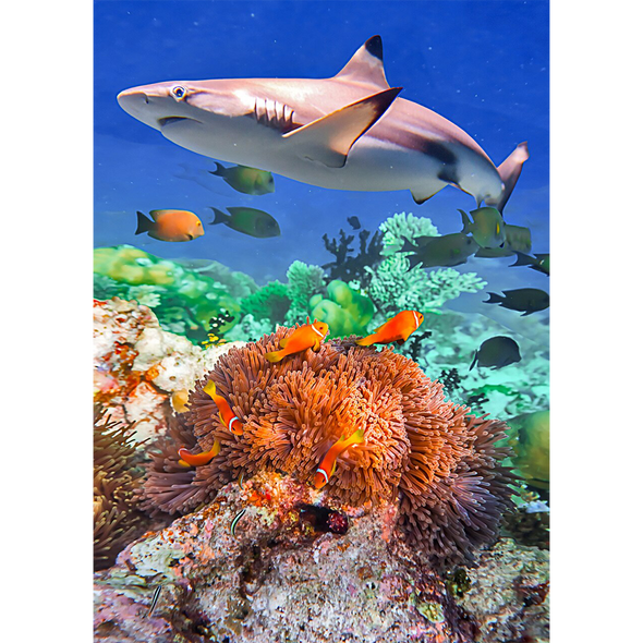 Blacktip Shark in a Coral - 3D Lenticular Postcard Greeting Card